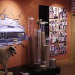 Museo del Cerrato (4)